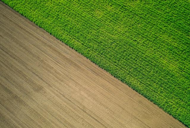 Opryski herbicydowe zapobiegają wzrostowi chwastów w uprawach